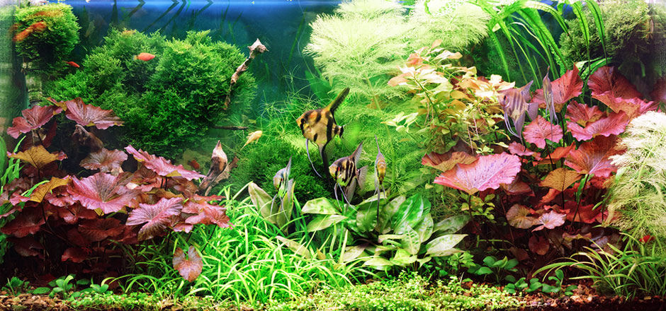 How to keep fish alive for How to maintain fish tank