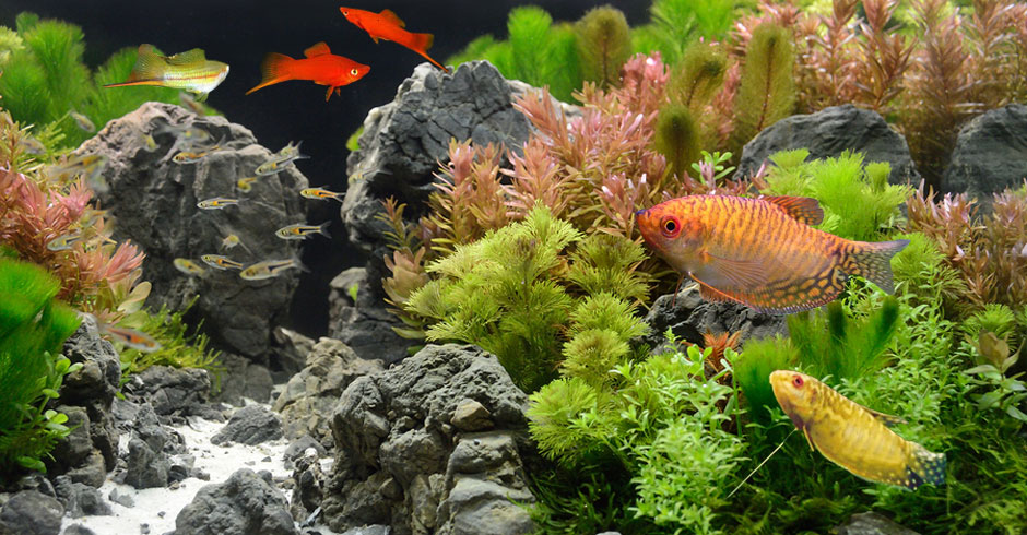 Tropical fish diseases for Fungus on fish